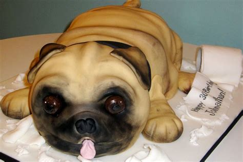 amazing pug gallery the cake box