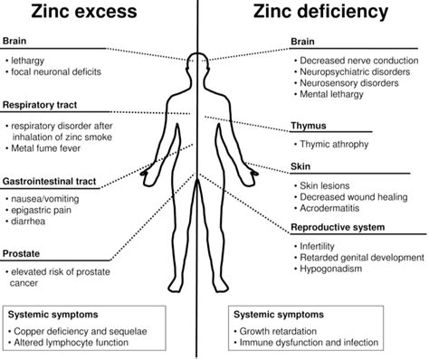 Zinc For Copper Detox by Do You A Copper And Zinc Imbalance Drjockers