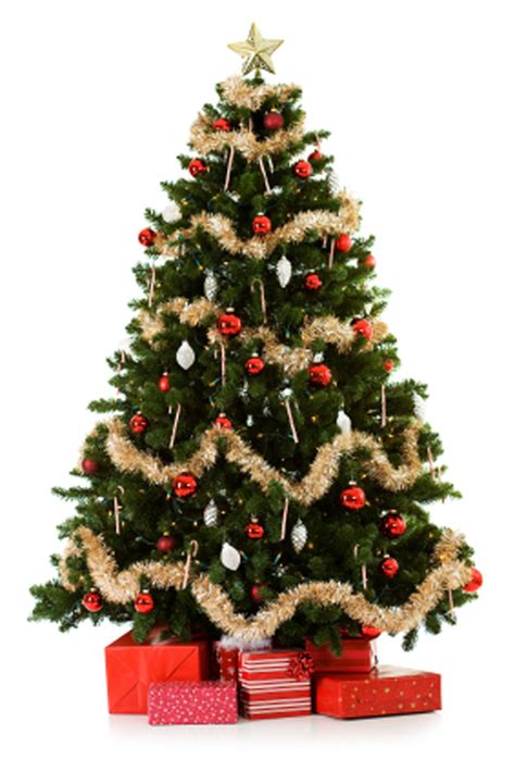 echter weihnachtsbaum tree safety tips residential guide