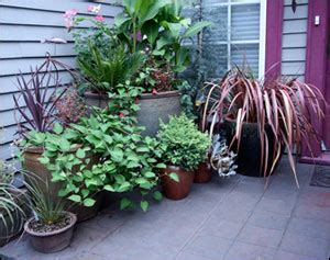 Container Gardening Gardening Solutions University Of Container Vegetable Gardening Florida