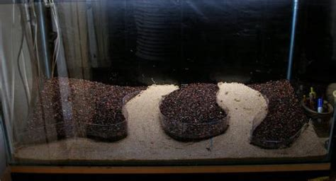 Best Substrate For Aquascaping by Best Substrate For Keeping A Slope Aquascaping World Forum