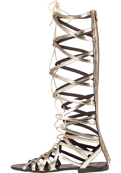 hercules sandals steve madden hercules metallic gladiator sandals in