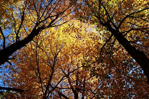 top 10 pictures of trees for day visit chasse for a autumn in louisiana small