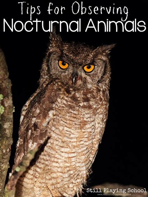 are dogs nocturnal tips for observing nocturnal animals still school