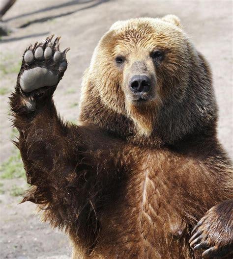 l orso della casa un ladro aiuto ma era un orso entrato in casa di notte