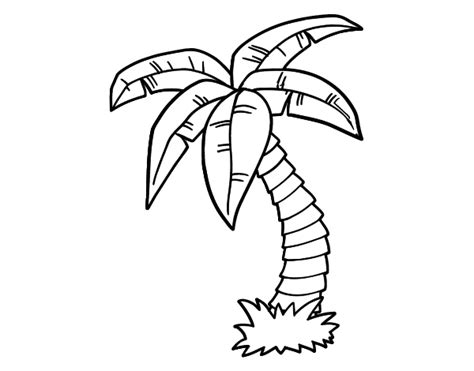Free Coloring Pages Of A Palm Tree Palm Tree Coloring Page