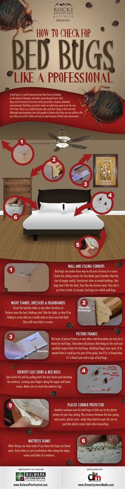 Bed Bugs Treatment At Home by Best 20 Bed Bugs Treatment Ideas On Bed Bug