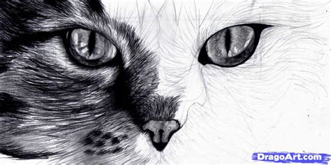 cat eye drawing step 10 how to draw cat eyes
