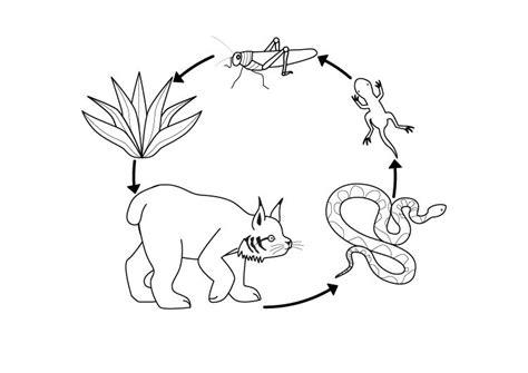 cadenas alimenticias ejemplos con dibujos cadena alimenticia dibujo para colorear e imprimir