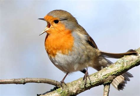 different types of birds that sing s visits with god listening to god through his word