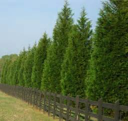 Types Of Fences For Backyard Privacy Trees These 4 Grow The Fastest Fast Growing
