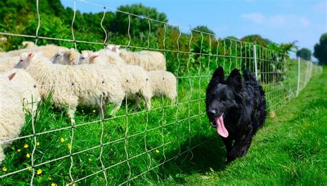 farm breeds 20 farm breeds for living in the country tasty pet foods