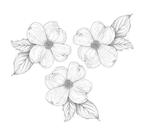dogwood flower tattoo designs dogwood tree flower drawing www pixshark images