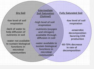 the effects of global climate change on soil respiration