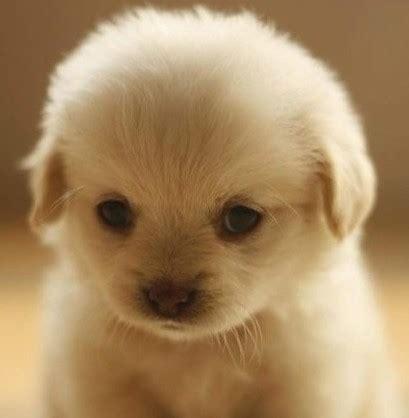 sad puppy pics pics for gt sad puppy photos