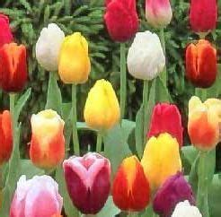 fiore canzone i fiori nella canzone italiana