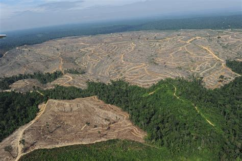 amazon video indonesia battling deforestation in indonesia one firm at a time