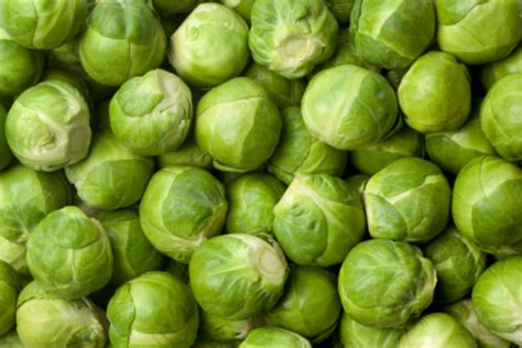 dogs brussel sprouts can dogs eat brussels sprouts american kennel club