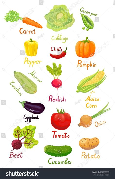 vegetables names vegetables clipart with names clipartxtras