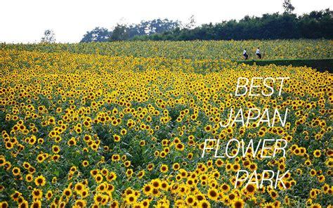 Rahasia Taman Bunga Serial Cantik 7 taman bunga cantik yang ada di jepang gwigwi
