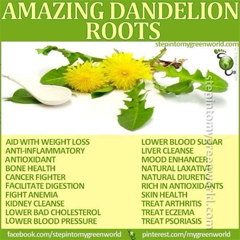 Nature S Detox Benefits by Benefits Of Dandelion Root Dandelions Herbs And Remedies