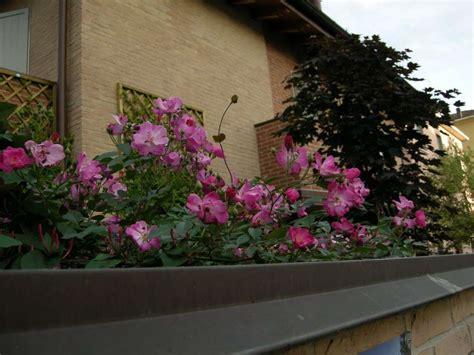 fiori terrazzo piante e fiori da balcone resistenti foto tempo libero