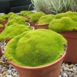 la mousse dans le jardin japonais le de jardinbzh