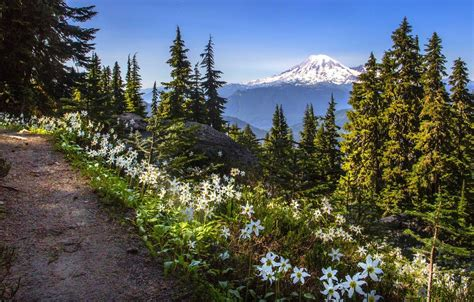 wallpaper forest trees flowers mountains lily trail