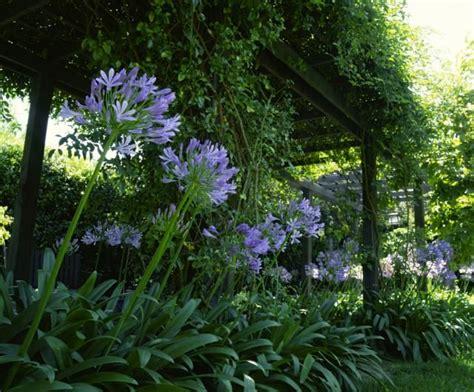 plantas para patio plantas para patios con sombra el agapanto jardines