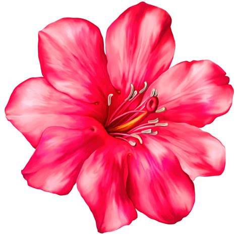 clipart flower png exotic pink flower png clipart picture patterns