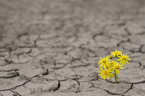 How Long Do Flowers Last by Cultivating Emotional Resilience In Your Child With