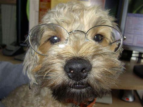 www perro coje a mujer esposa se coje un perro newhairstylesformen2014 com