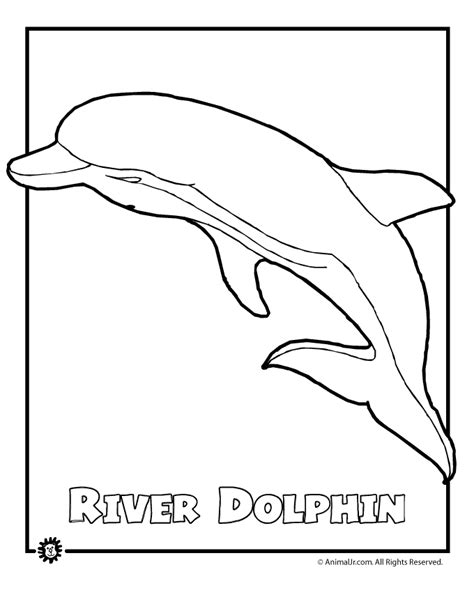 river dolphin coloring page dolphin color pages coloring home