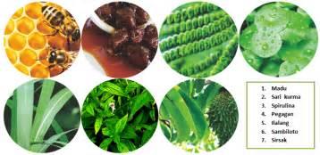 Obat Herbal Pemulihan Stamina madu sj untuk obat kesembuhan dan stamina info jaga