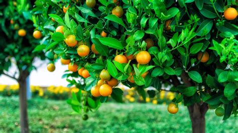 All Fruit Wallpaper