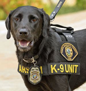 how are k9 dogs trained is it worth investing in k9 or plus nutrition