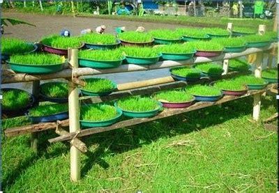 Metode Aborsi Jawa Barat Pengelolaan Tanaman Padi Melalui Metode Sri System Of