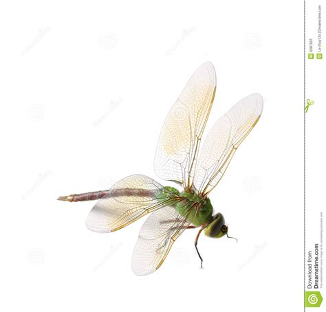 green dragonfly l green dragonfly stock image image of closeup