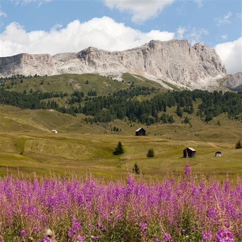 appartamenti arabba dolomites apartments for rent home service arabba italy