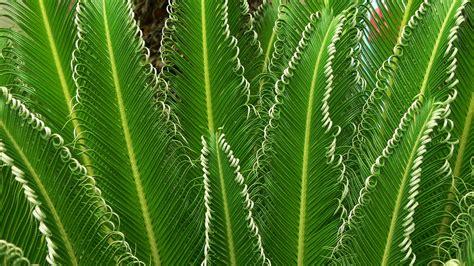 plants photos hd