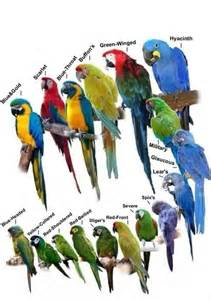 macaw types panama pinterest beautiful and birds