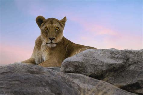 5 Safari Stuff To See by Safari Animals 34 Photos That Will Make You Want