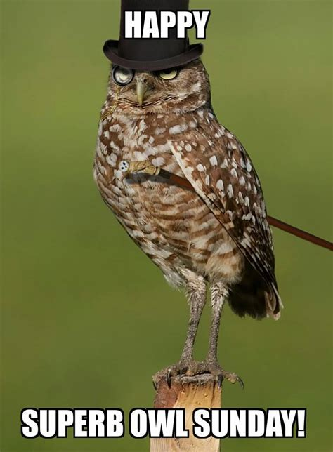 Superb Owl Meme - does anyone have a picture of a superb owl sitting inside