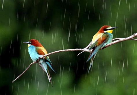 birds in rain wallpapers hd pictures one hd wallpaper
