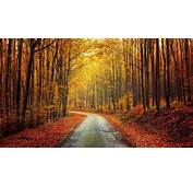 Nature Landscape Fall Forest Road Red Yellow Leaves