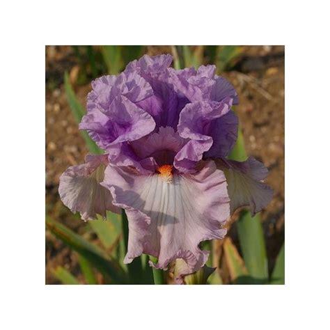 pot exterieur 3623 iris modern plantes et jardins