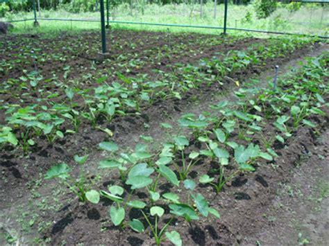 balai benih hortikultura loka bantaeng tanaman hias