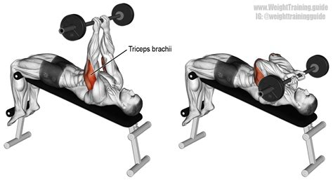 incline bench skull crushers decline skull crusher exercise guide and video weight training guide