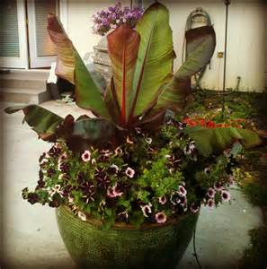 Tropical Planter Ideas by Tropical Plants In Planters The Plant Farm