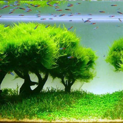 aquascape definition aquascape keeping fish aquascaping pinterest